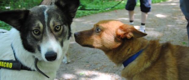 Hunde können bei einer Depression Wunder wirken