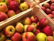 Obst gegen Esstörung